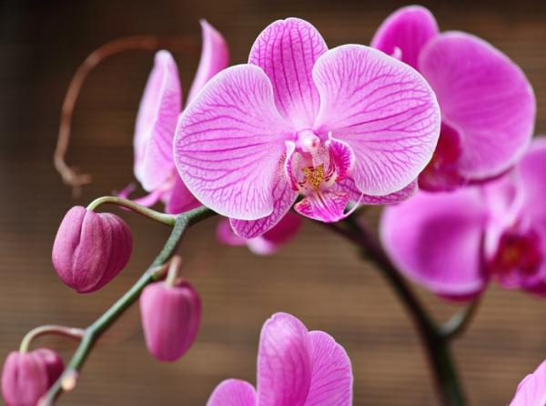 Рождение принцессы. Как размножить орхидею в домашних условиях?
