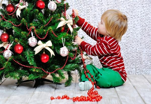 Как выращивают новогодние елки для продажи МирСовет