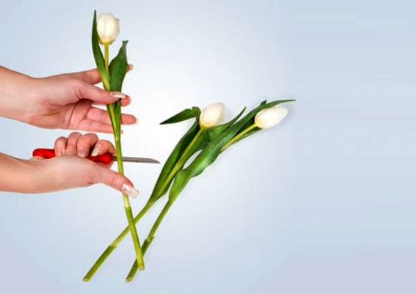Как собрать букет из тюльпанов своими руками