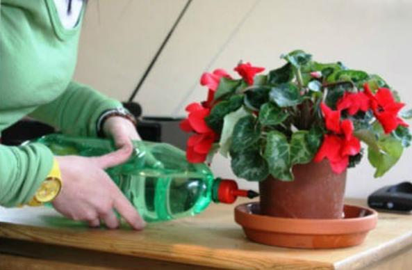 Поливать цветы в домашних условиях