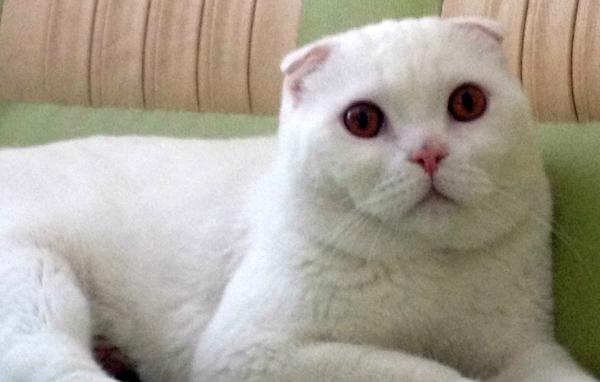 Кот кастрированный гадит где попало что делать