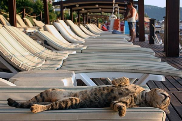 Картинки по запросу кот на отдыхе