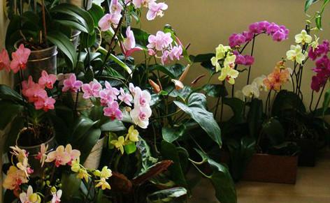Орхидея у вас дома