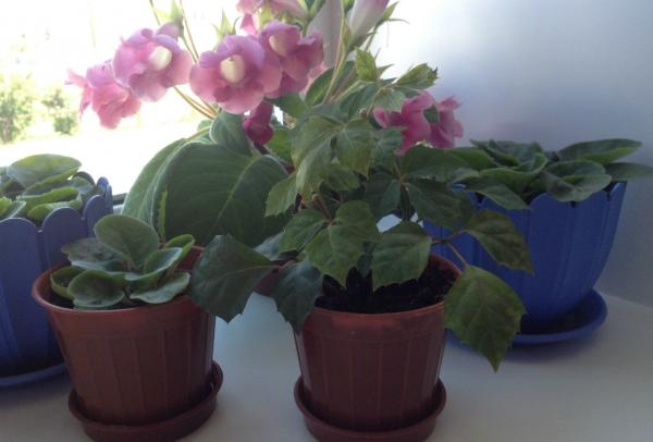 Условие содержания домашних растениях